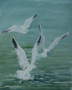 Gulls squabbling